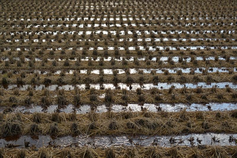 収穫跡-3