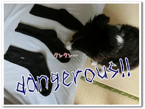 AdgrXVngGkXo89F1442979597_1442979738.jpg