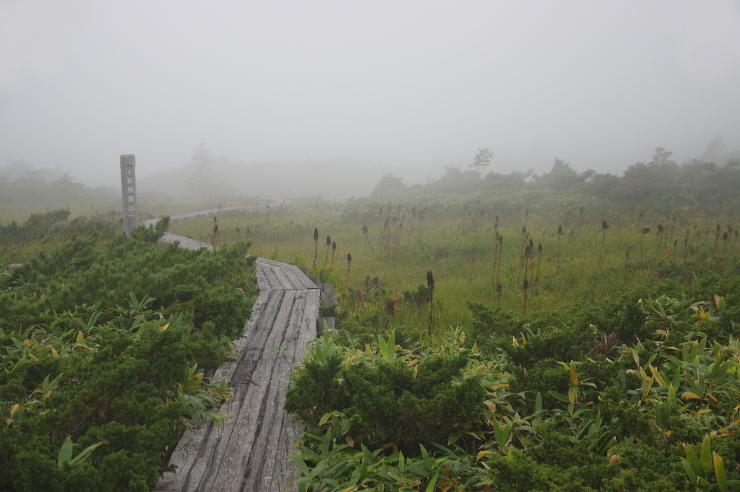 霧の景場平