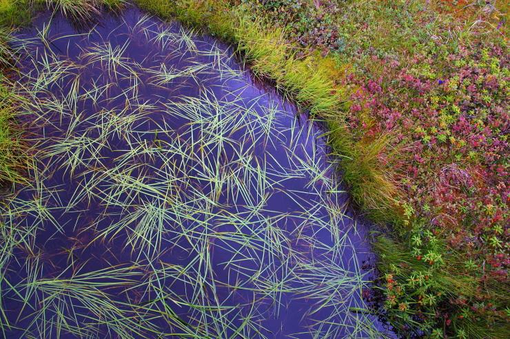 ホソバタマミクリのある池塘