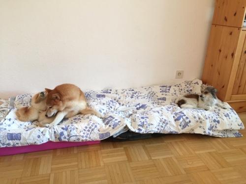 同じベッドで