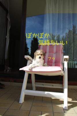 椅子の上のフミ