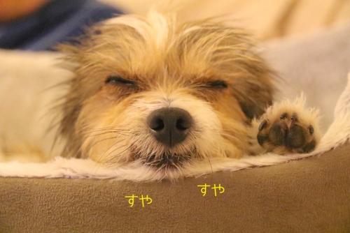 フミの寝顔1