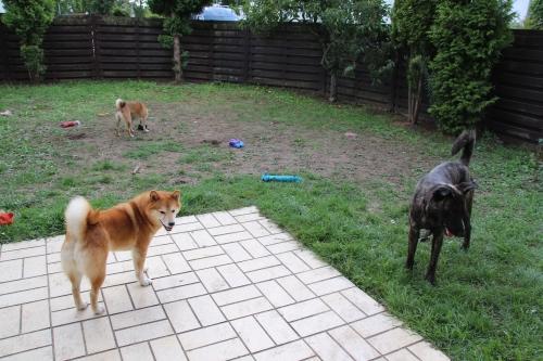 庭でガブとアスカとセナ