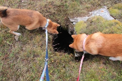 シャレック登山おっきな 穴