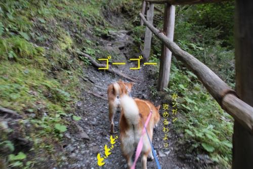 ガンガン登る山犬3