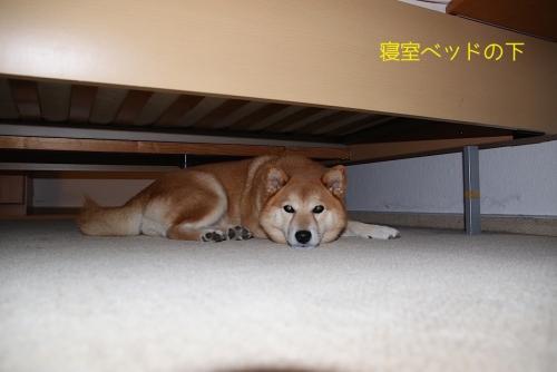 寝室ベッドの下で寝転がる