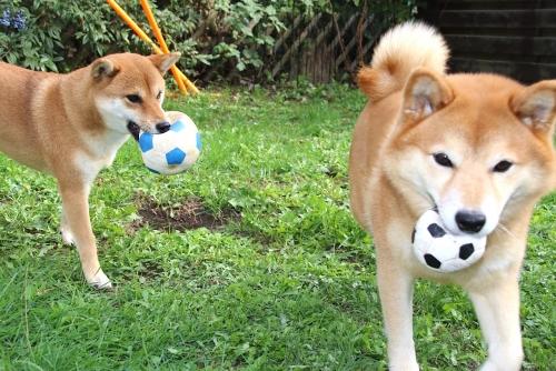 2匹でサッカーボール