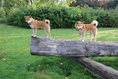 2匹で木の上