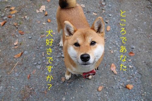 犬好きですか?