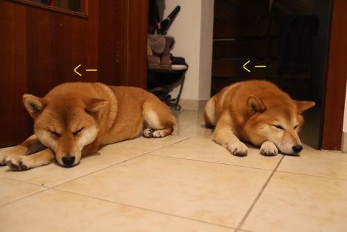 寝落ちな2匹
