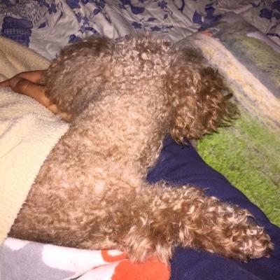 腕枕で寝落ち