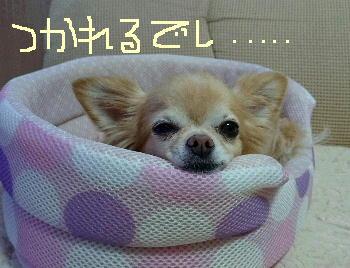 blog20150802102.jpg