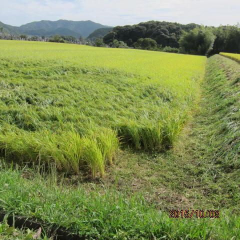 水田最後の草刈り