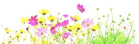 flower1928.jpg