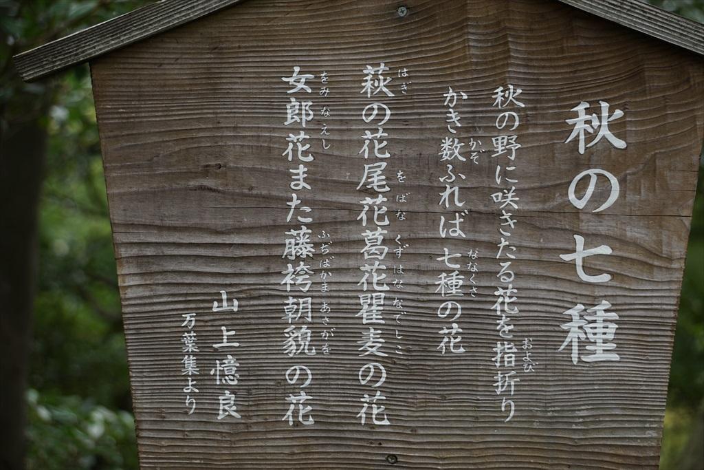 本館脇の花園_3