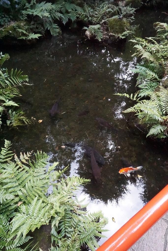 真姿の池_3