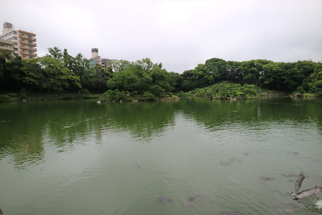 美しい池の景観(1)_6