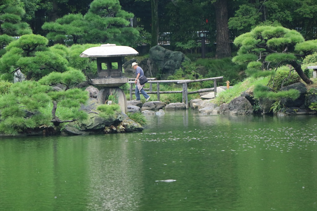 美しい池の景観(2)_4