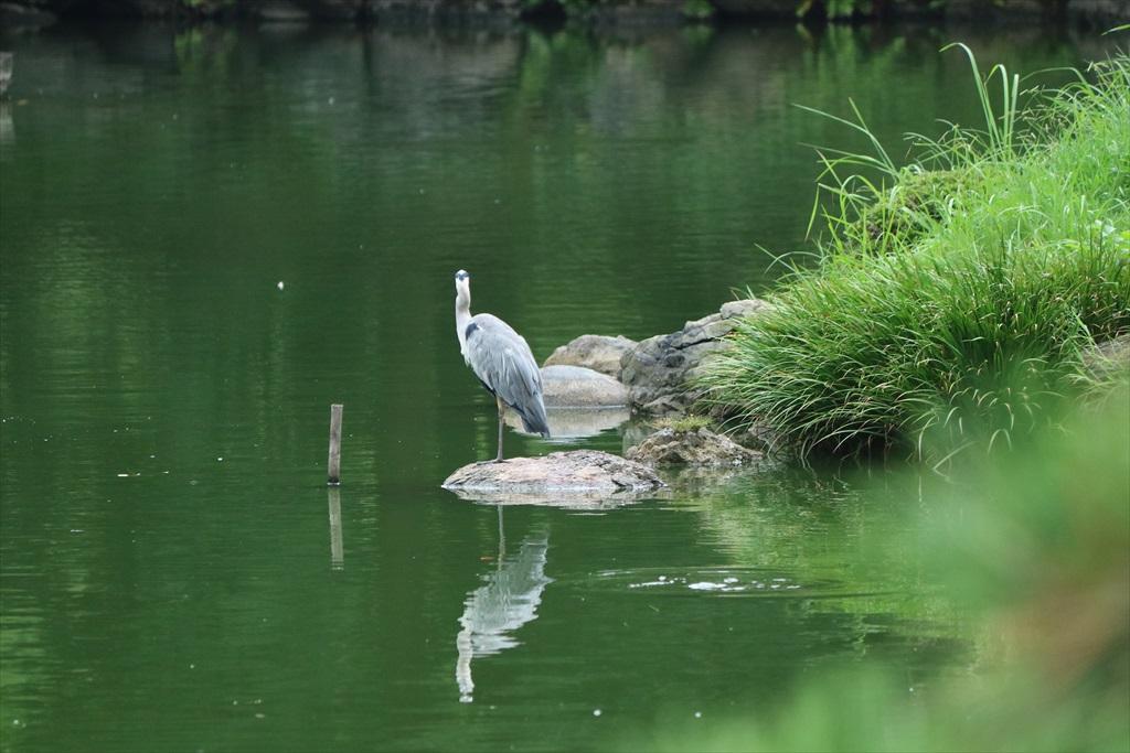美しい池の景観(2)_8