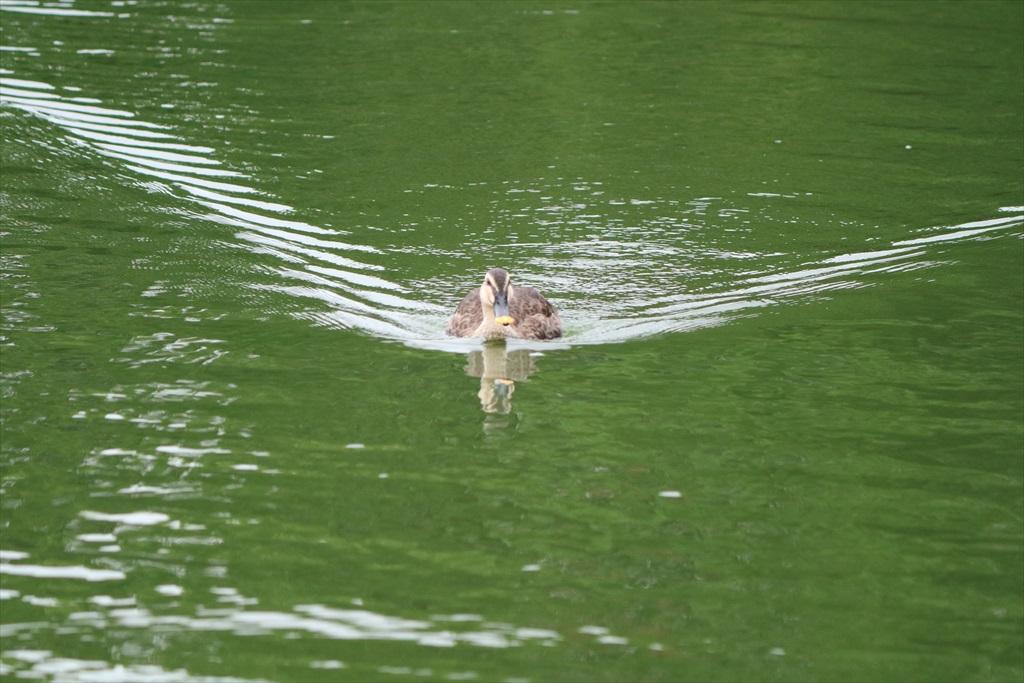 美しい池の景観(2)_17