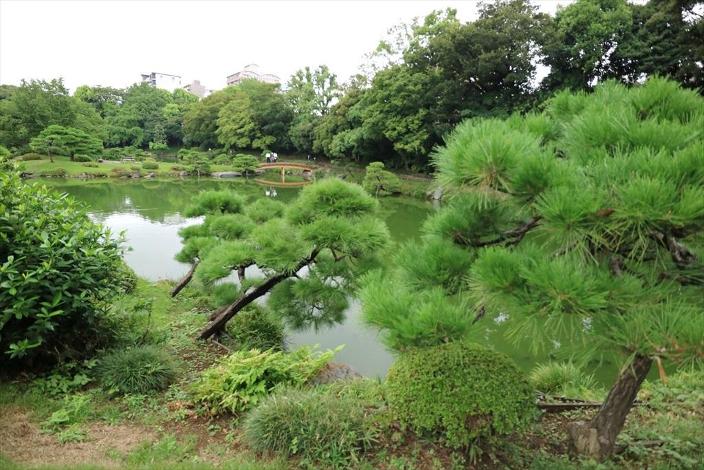 再び池沿いの小道に戻る_3