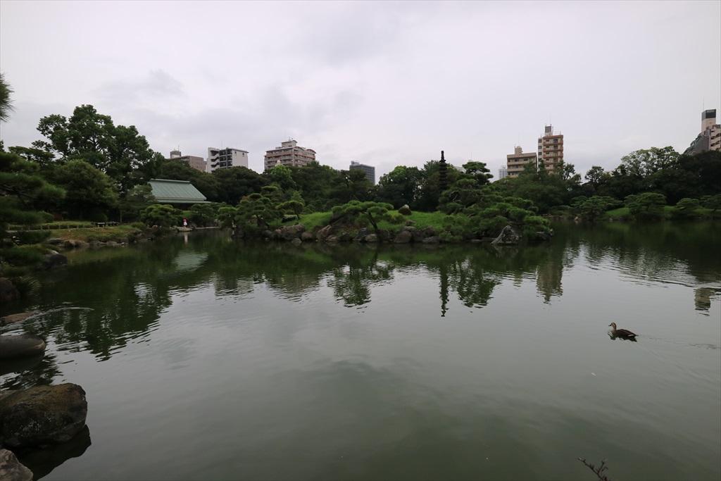 美しい池の景観(4)_7