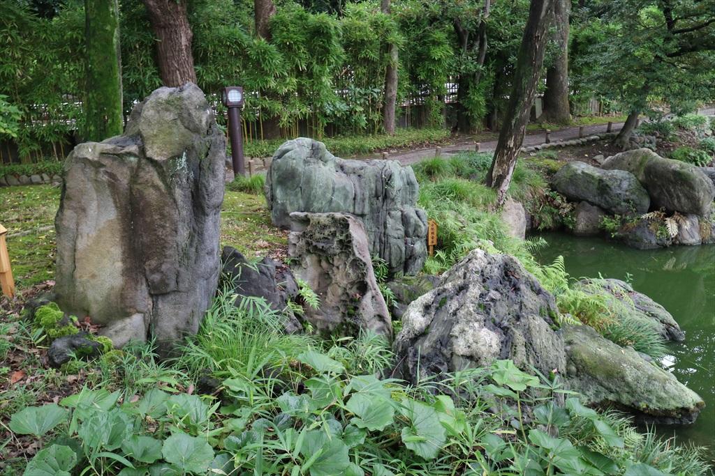 美しい池の景観(4)_11