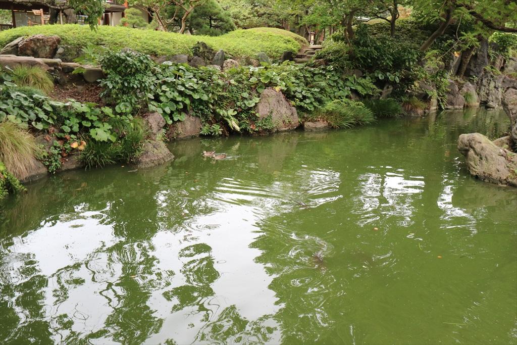 美しい池の景観(4)_23
