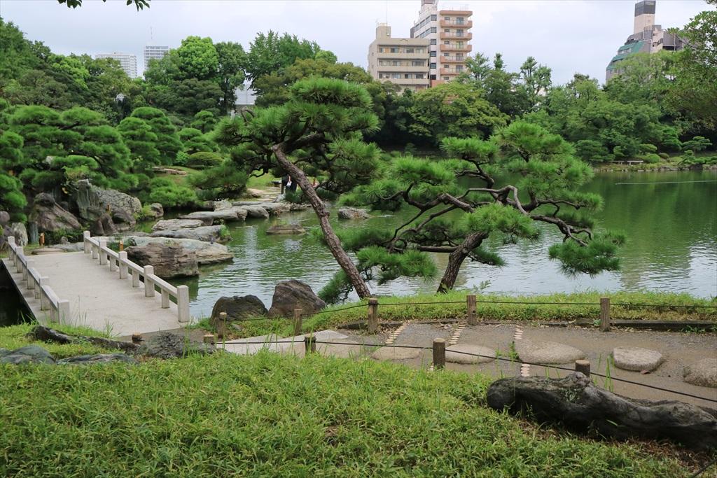 美しい池の景観(4)_24