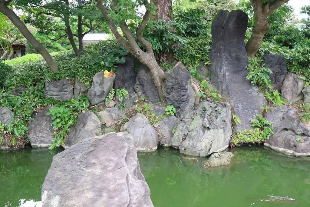 美しい池の景観(4)_26