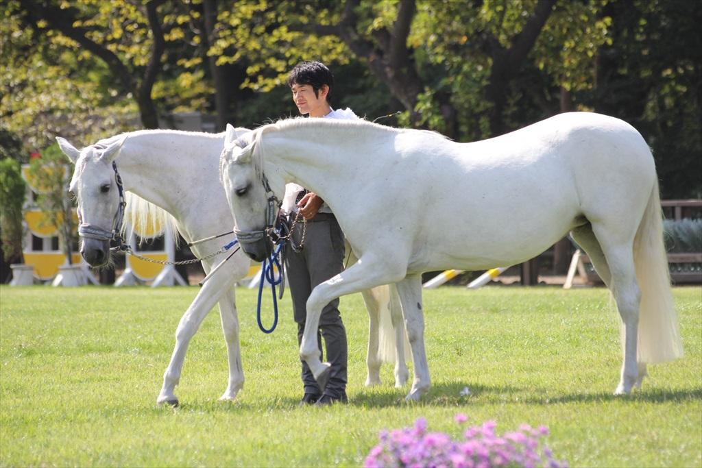 白馬の優雅な挨拶