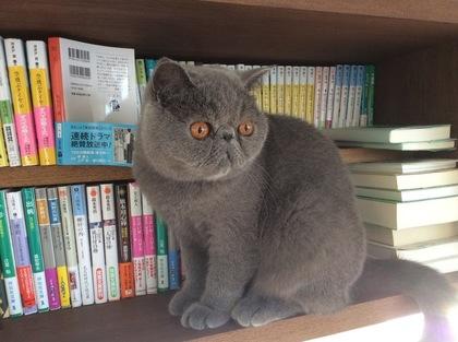 今日は本棚にIN!