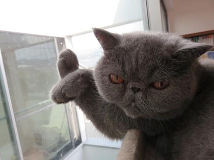窓に手をついてる