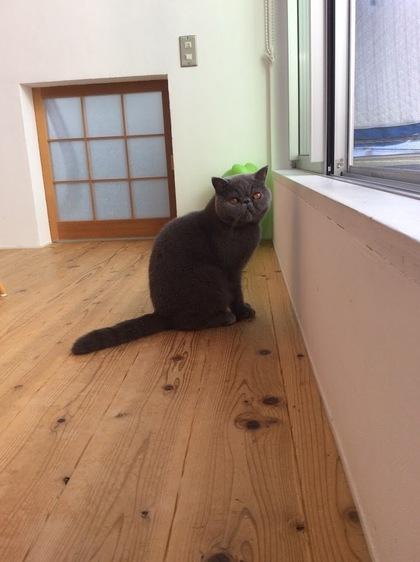 猫らしい姿勢