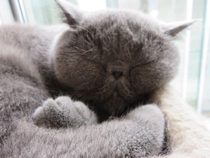 厳しい顔で寝てるなぁ