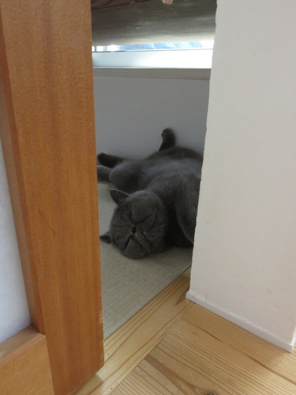 覗いてみたら寝てた、、、