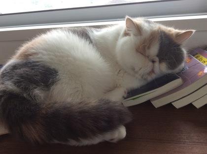 本を枕にお休み中