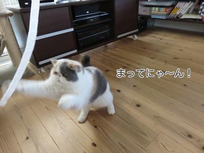 コラ待て~~~!