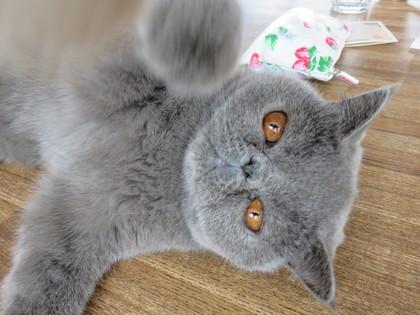 猫ぱ〜んち