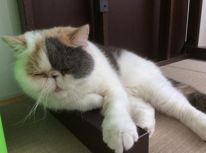 さ、、、仕事=寝る