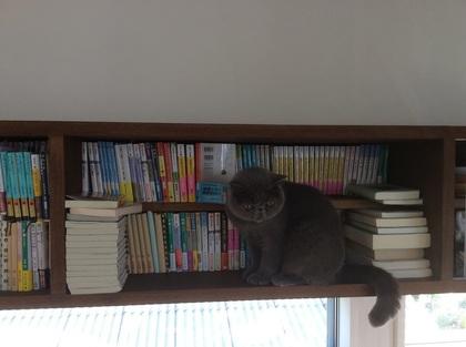 本を綺麗に並べすぎた