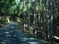 151003本山寺激区間を上る