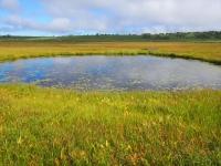 8月24日、湿原は既に秋のたたずまい