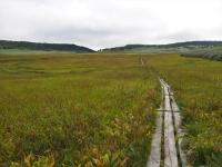 広い湿原、どこまでも続く木道