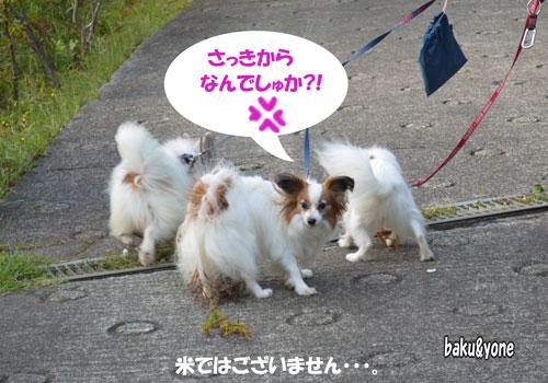 シッポの草_3