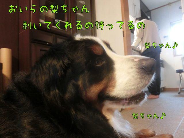 CIMG5632.jpg