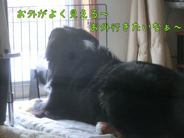 CIMG5643_2015090213012282b.jpg