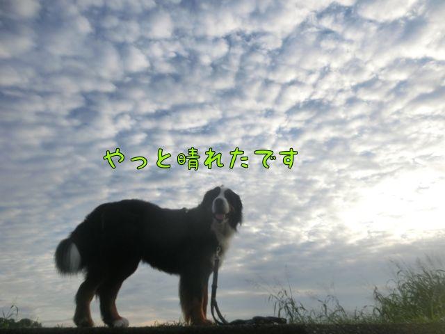 CIMG5812_201509110959296e4.jpg
