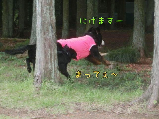 CIMG5894.jpg